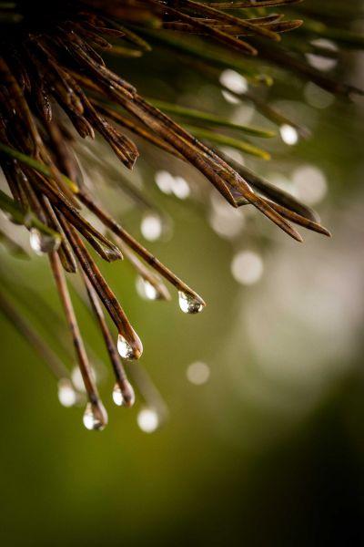 Asilomar Rain Drops