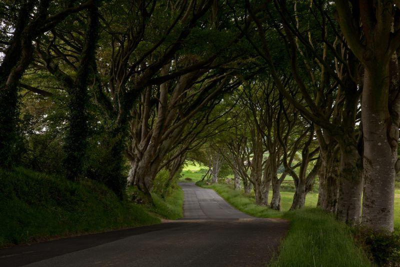 Scottish Lane
