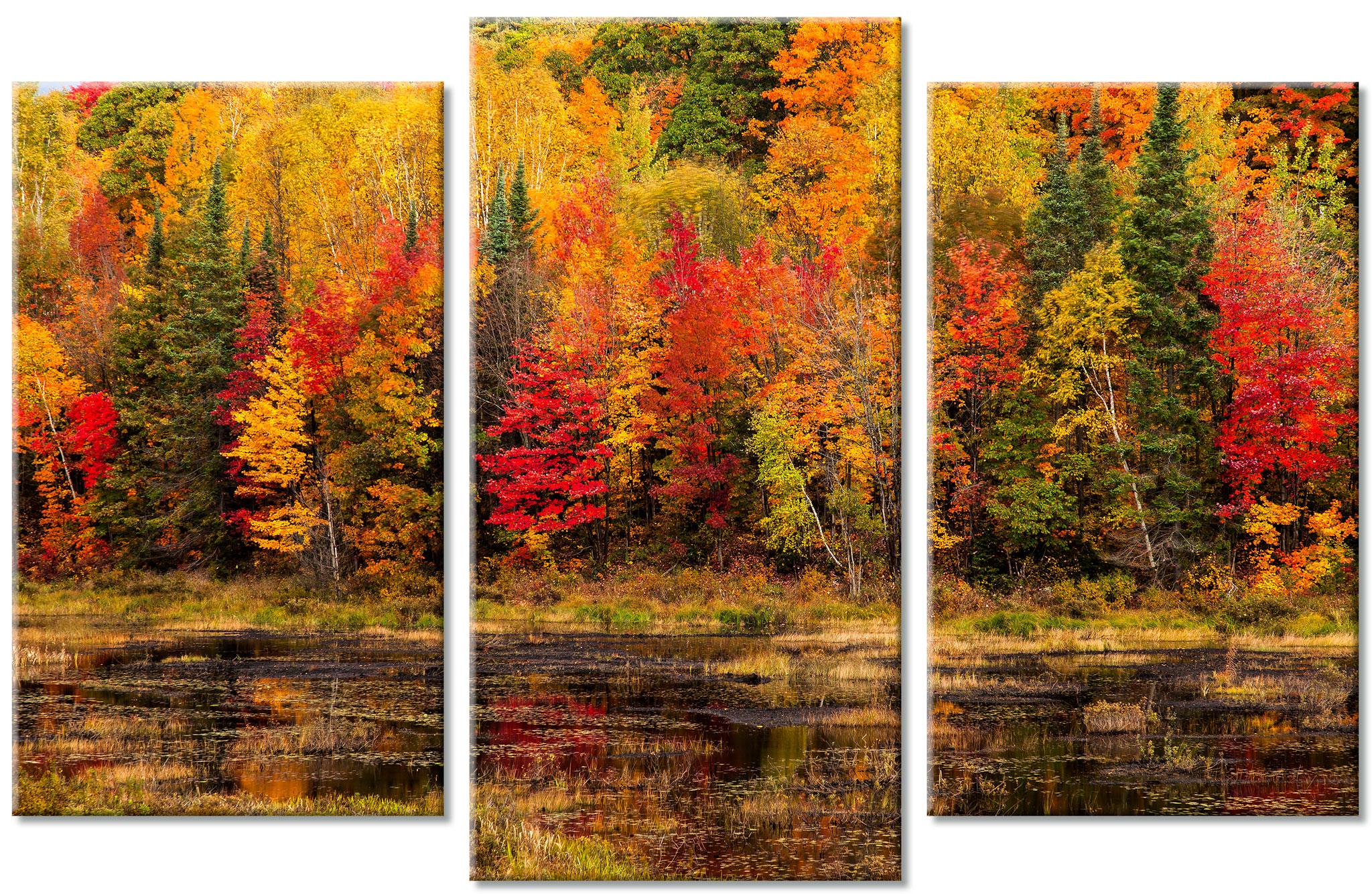 Autumn Colours Triptych