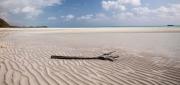 Gold Beach Driftwood