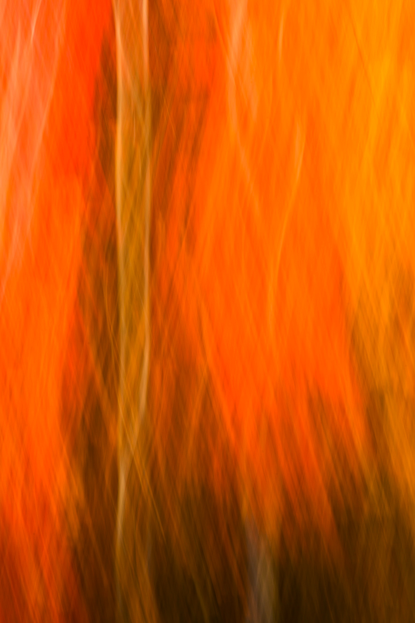 Autumn Entanglement