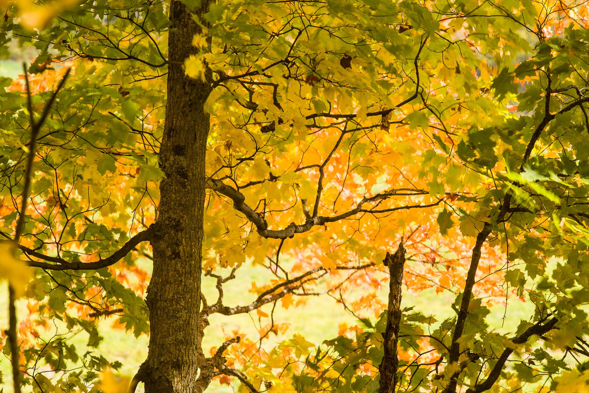Under an Autumn Canopy
