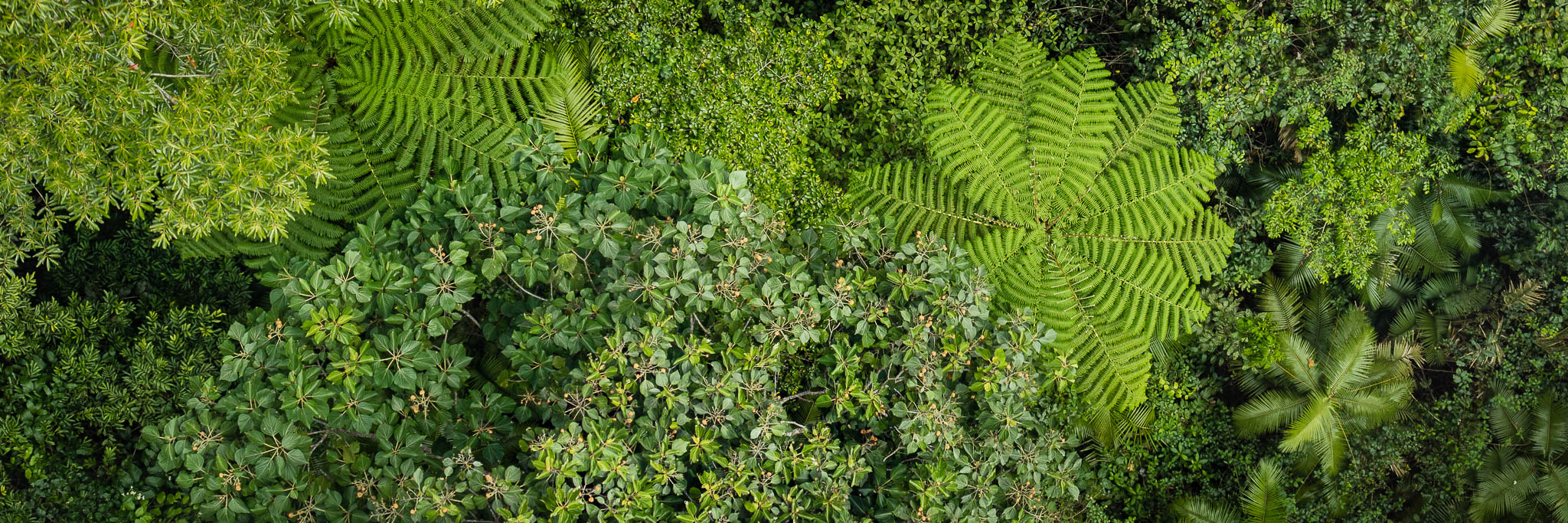Tropical Forest Canopy