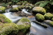 Moss and Flow